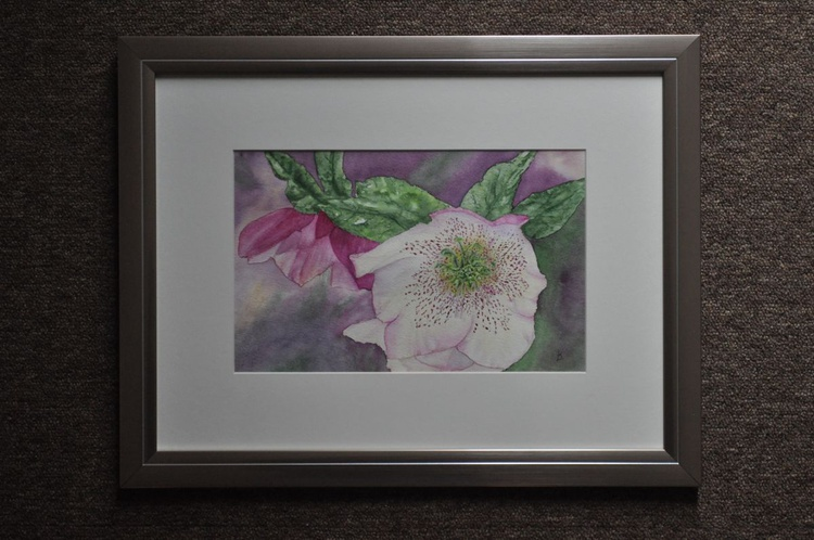 Hellebore (Lenten Rose) - Image 0