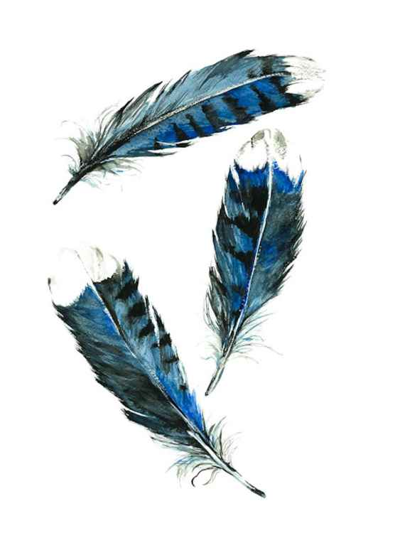 The trio, Blue Jay Feathers