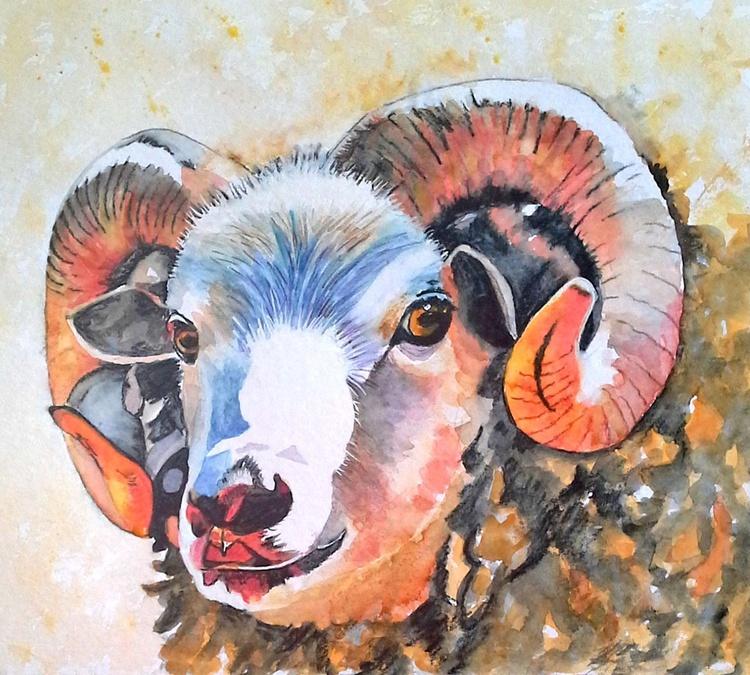 Colourful Sheep - Image 0