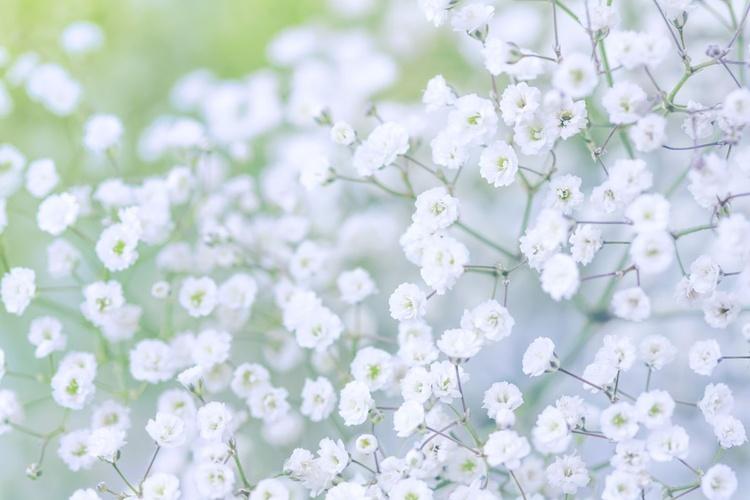 White Tenderness VII - Image 0