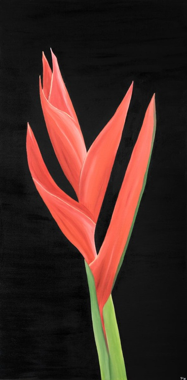 "Bird of Paradise Collection, 20"" x 40"" (50 x 100 cm), Oil on Canvas - Image 0"