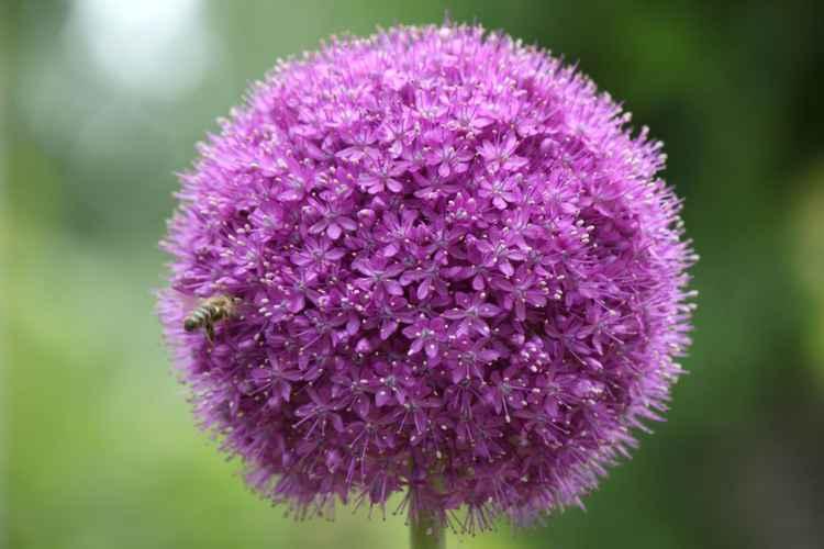 Flower ball -