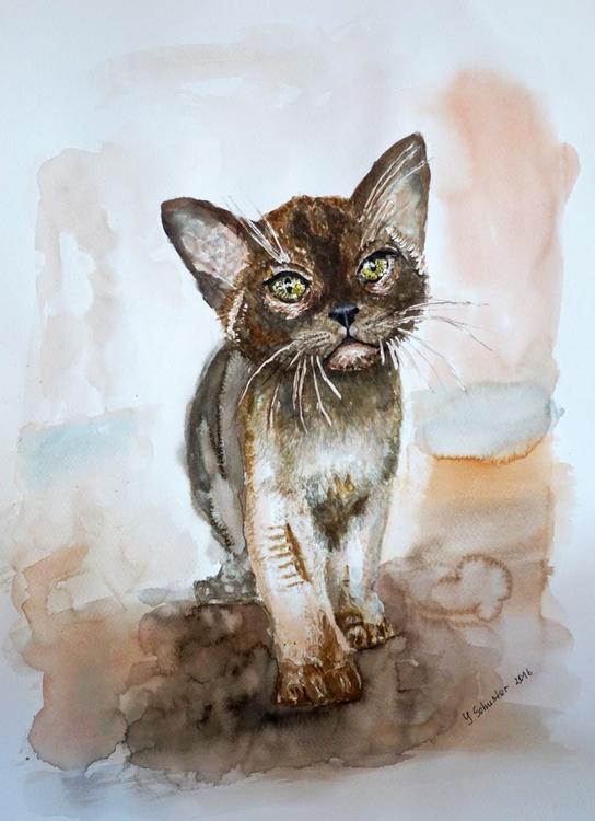 Chocolate Burmese Kitten - Image 0