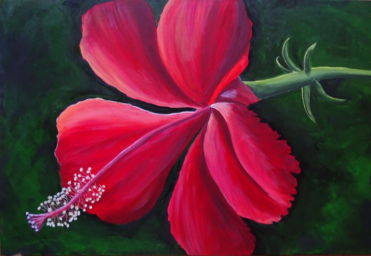 The Red Hibiscus - Image 0
