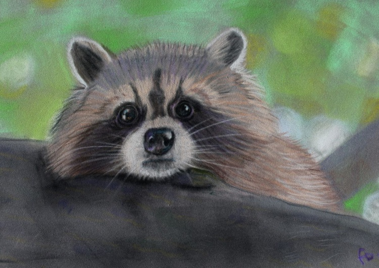 Furry Face,  framed picture of a raccoon - Image 0
