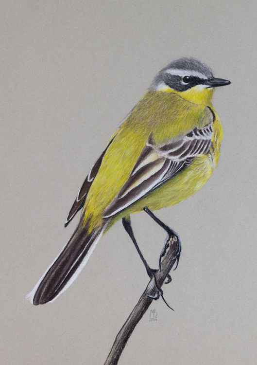 "Original pastel drawing ""Yellow Wagtail"""
