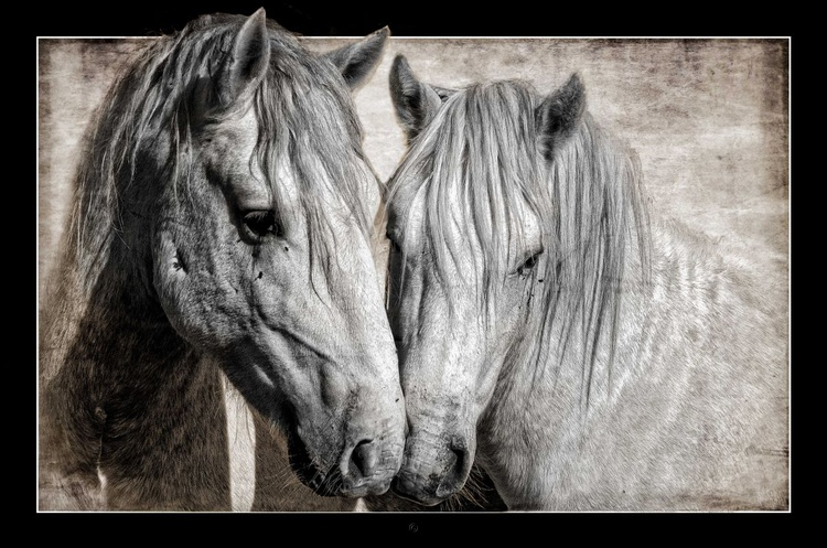 The Camargue couple - Image 0