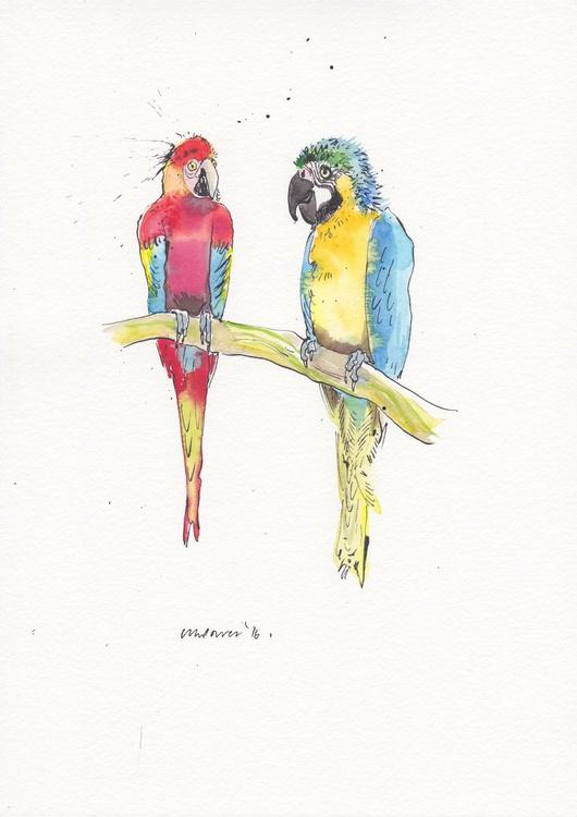 Maccaw Mates, daily Bird #37 - Image 0