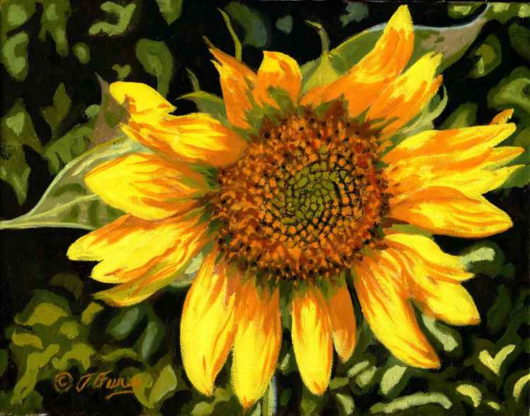 Sunflower Swirl -