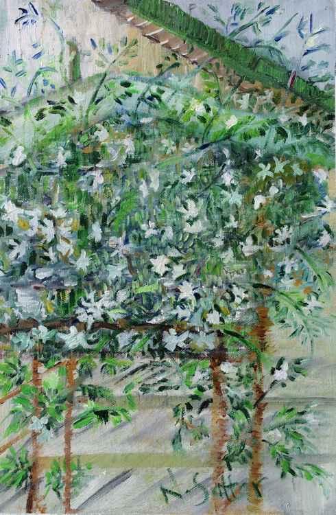 Jasmines at Salhudheen -