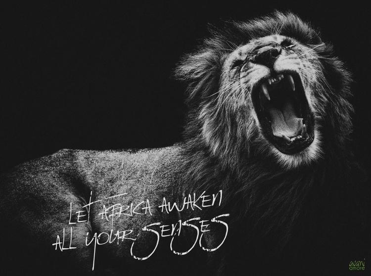 Let Africa awaken all your senses - Image 0