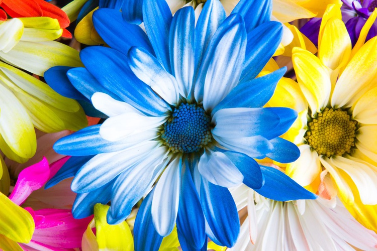Flowers of Bouquet - Image 0