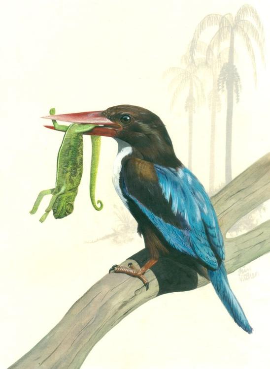 White Breasted  or Smyrna Kingfisher - Image 0