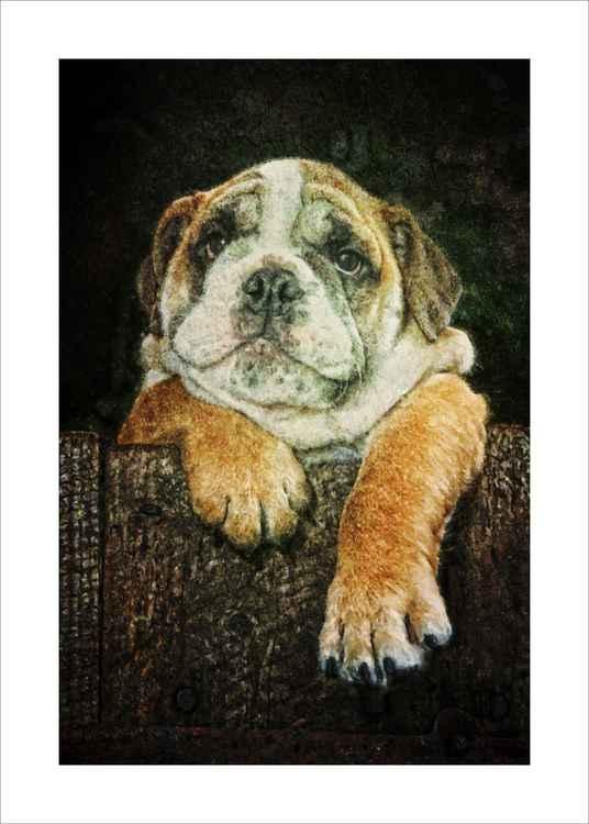 Cool Bulldog-Just Chilling