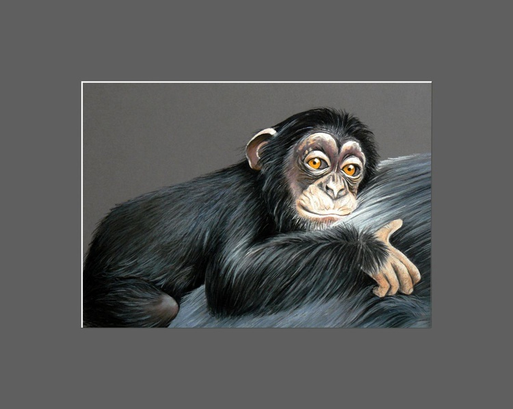 Primate -chimpanzee - Image 0