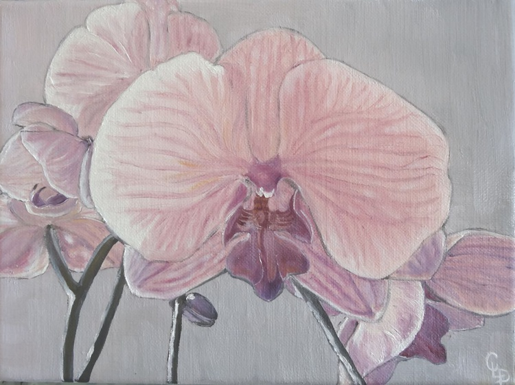 Soft pink - Image 0