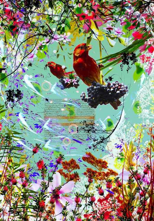 cerulean-redBirds-collage-16x23 ed.50 -