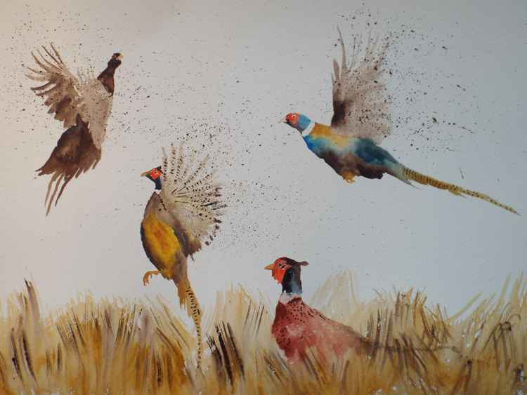 Flushed Pheasants