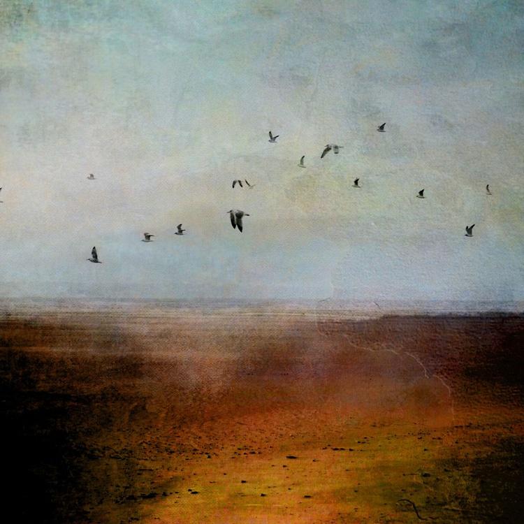 birds on coast - Image 0