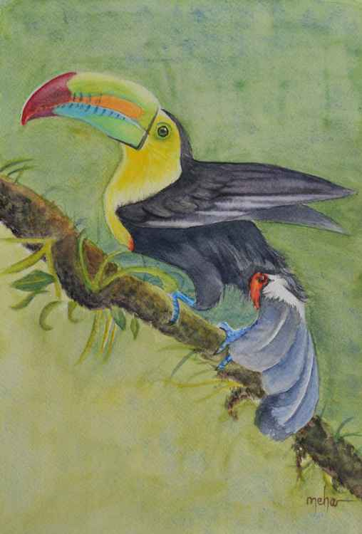 Keel-billed toucan with background