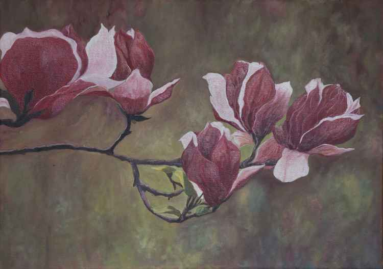 Magnolia Branch - Miracle Of Nature -
