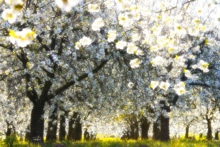 Velvet spring - Image 0