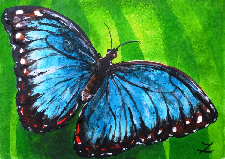 Blue Morpho Butterfly - Image 0