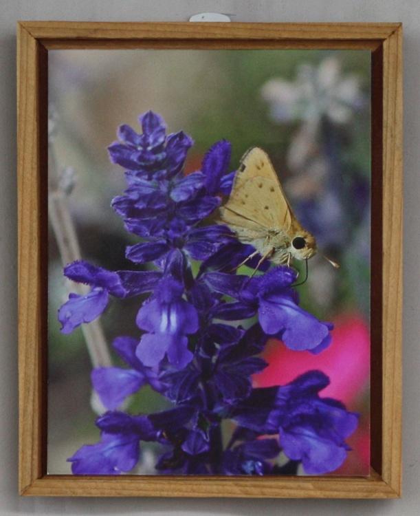 Butterfly & Purple Sage Spirit - Image 0