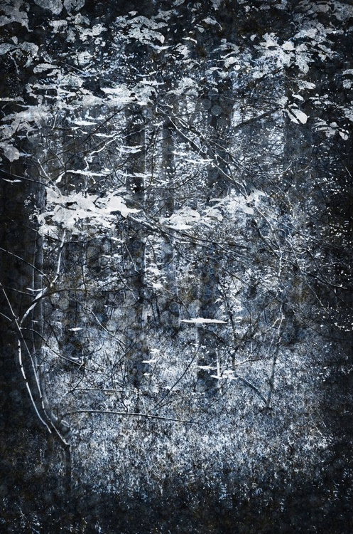 The Starlight Glade (Ltd Edition of only 20 Fine Art Giclee Prints from original artwork.) - Image 0