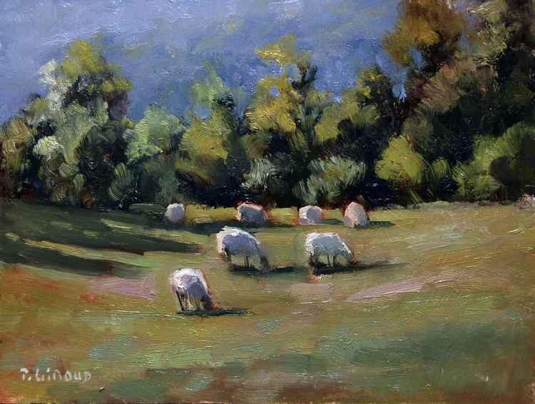 Sheeps -
