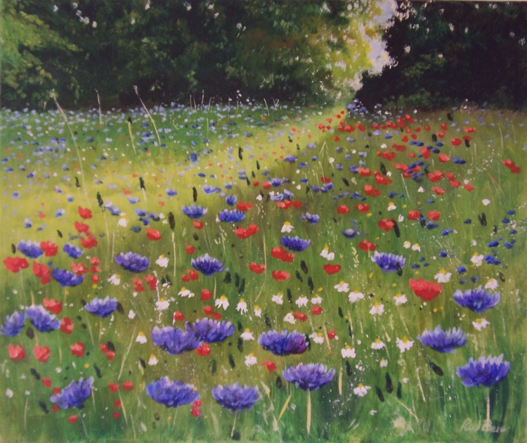 Early morning summer meadow - Image 0