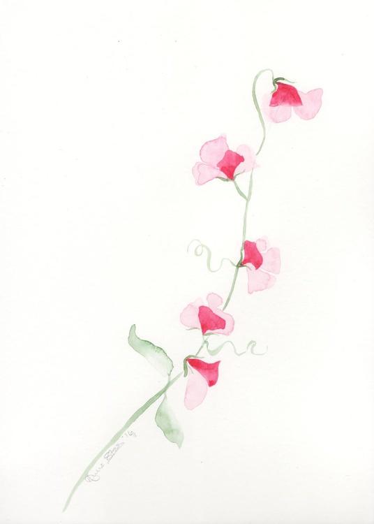 Pink Sweetpeas - Image 0