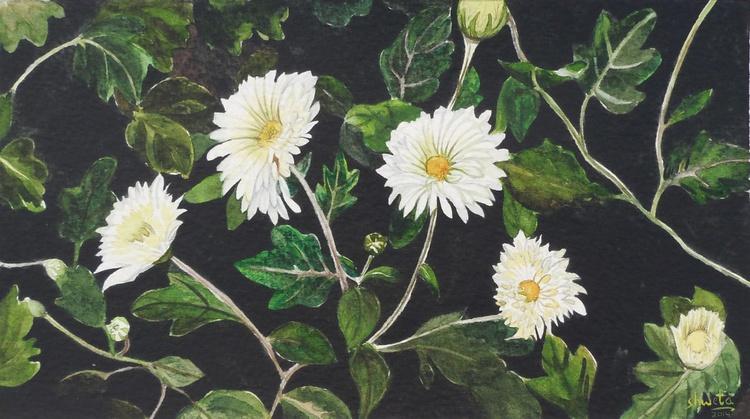Chrysanthemum flowers - Image 0