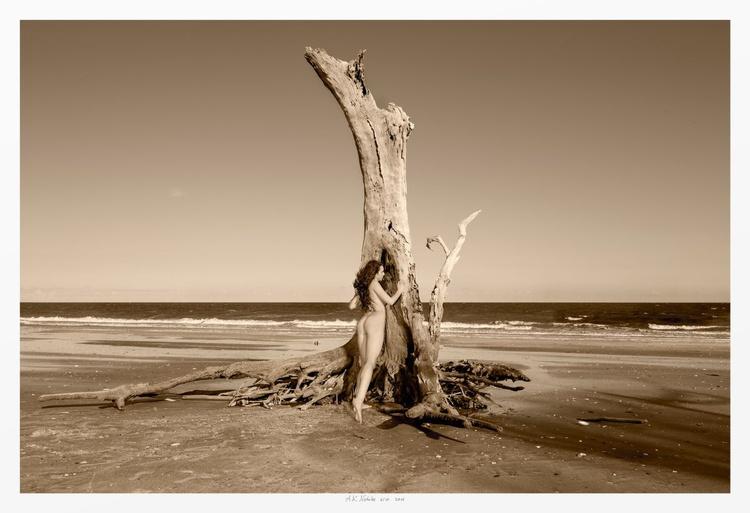 One Tree Beach - Image 0