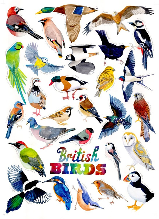 British birds - Image 0
