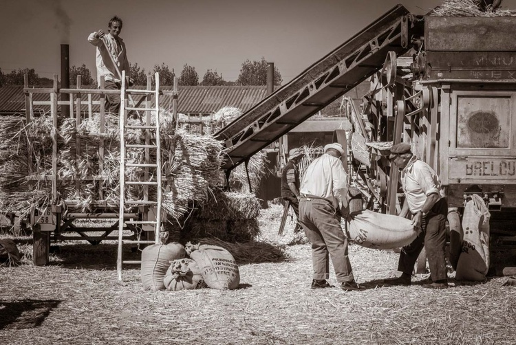 The jobs of yesteryear, the threshing - Image 0