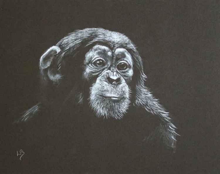Speculation   (Chimpanzee)