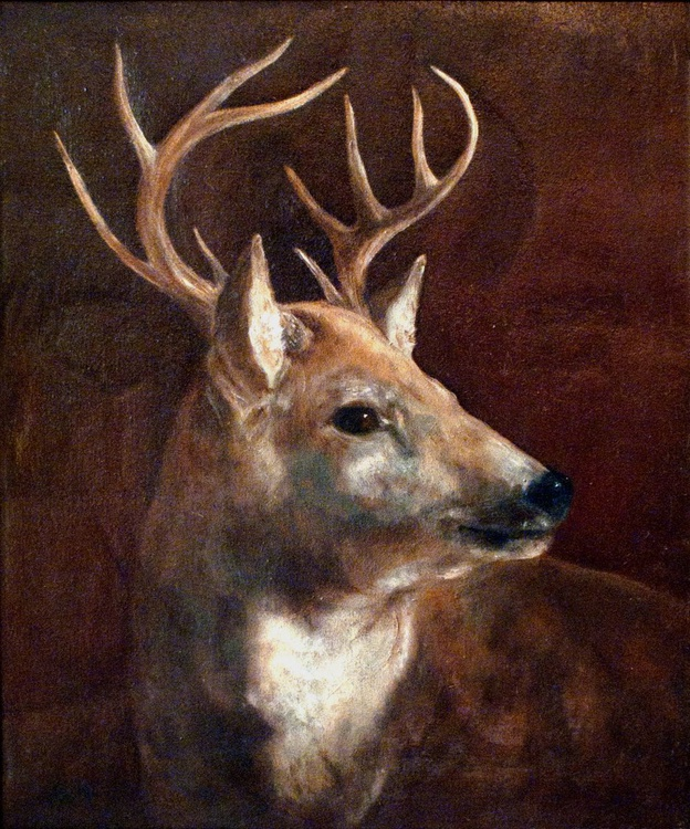 Young Stag - Image 0