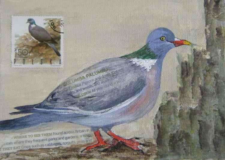 Wood Pigeon -