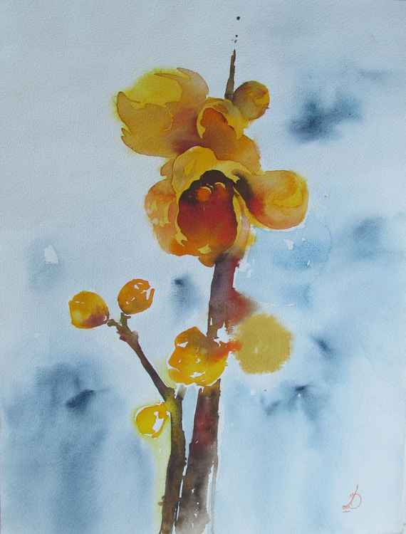 Chimonanthus -