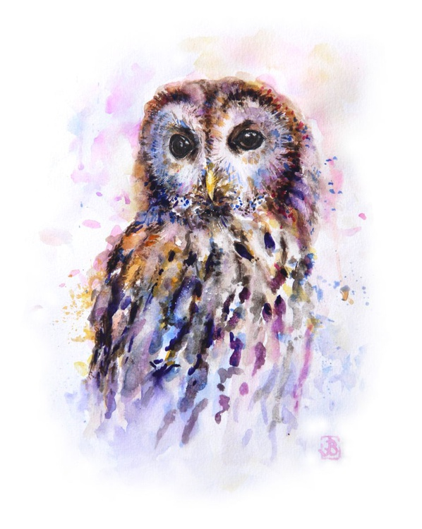 Tawny Owl - Image 0
