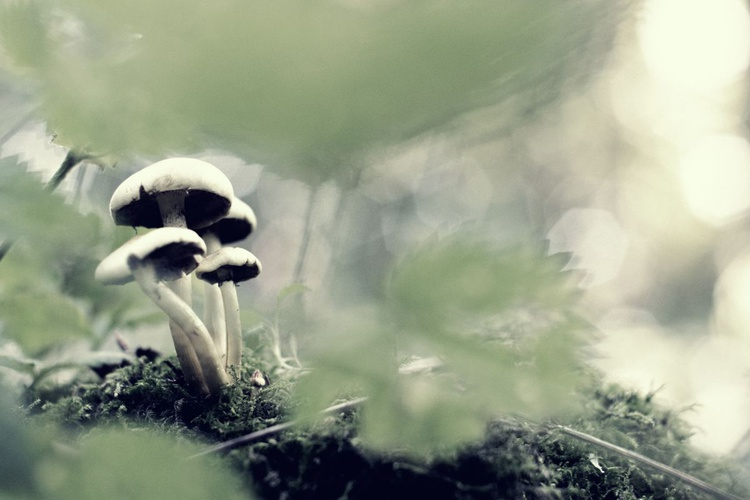 Woodland Mushrooms, Too - Image 0