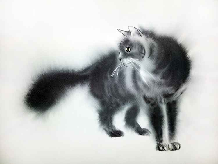 Fluffy Black cat -