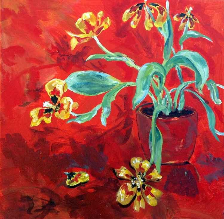 Freedom- Tulips