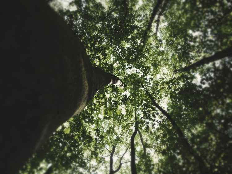 Treeview #6 -