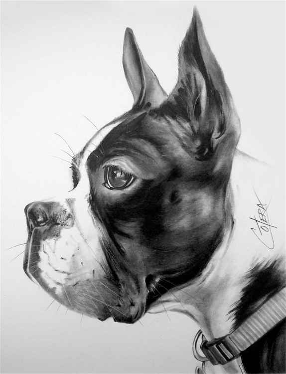 """French Bulldog"" -"