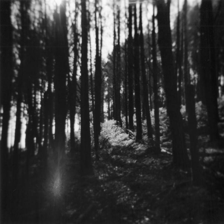 Northern Woods 1, 1/7 - Image 0