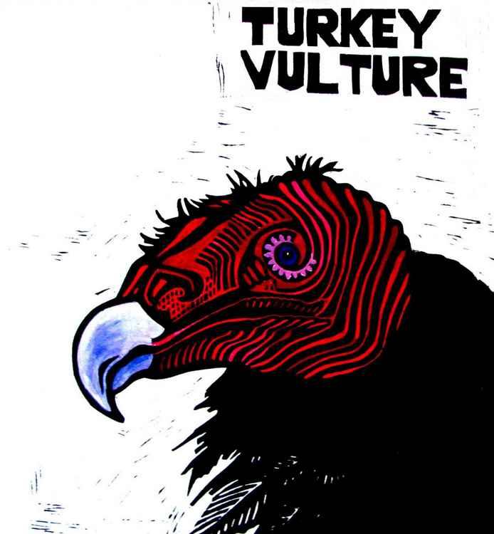 TURKEY VULTURE -