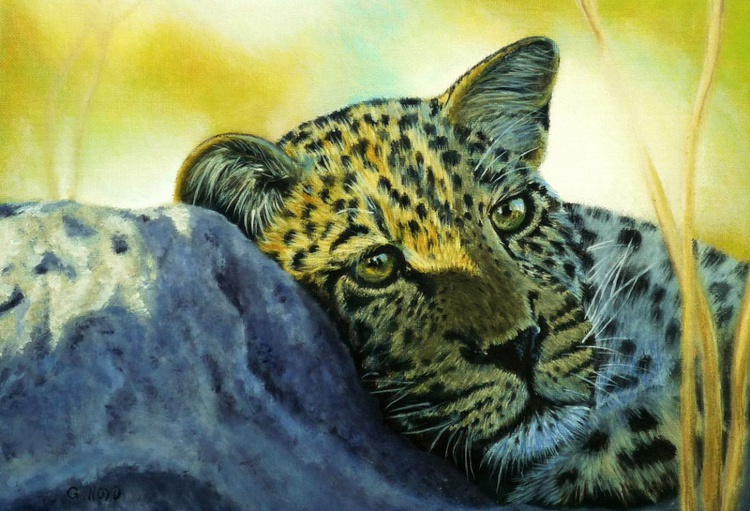 Leopard in the sun - Image 0