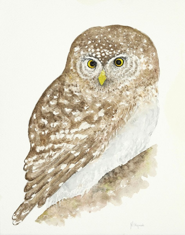 The little owl (Athene noctua) - Image 0